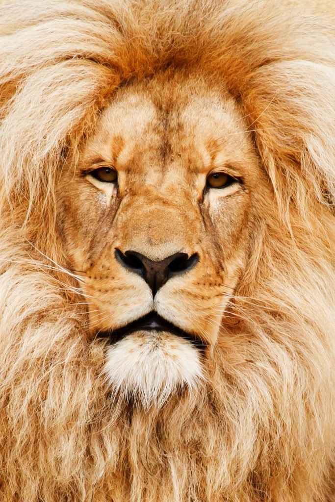 This image has an empty alt attribute; its file name is africa-african-animal-cat-41315.jpeg